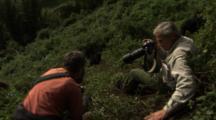 Scientists Watch Mountain Gorilla Climb Hill
