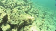 Travel Over Sea Floor Covered In Dead and Dying Coral