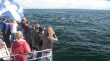 Whale Watchers On Boat, See Minke Whale