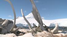 Blue Whale (?) Bones Stick Up In Antarctic Scenery. Jougla Point, Antarctic Peninsula