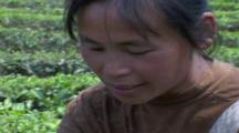 Sequence; Tea Estate And Woman Picker. Yunnan Province. China