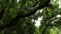 Pair Of Fairy Terns In Tree