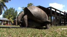 Giant Tortoises Coupling