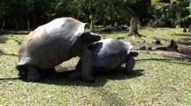 Giant Tortoise Finish Coupling
