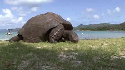 Seychelles Animal Stock Footage