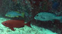 Sweetlips And Bigeye