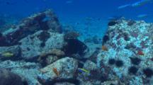 Hawksbill Turtle Along The Reef