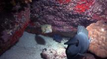 Boxfish And Unicornfish