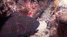 Parrotfish , Crab And Shrimp