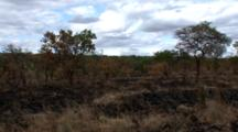 An Area Where A Controlled Burn As Used To Promote New Growth