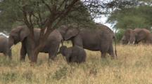 A Baby Elephant Practices Trunk Control