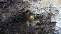 Tortoise Beetle Feeds On A Log