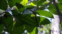 Walking Stick On A Leaf