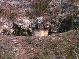 Owl Chicks In Burrow