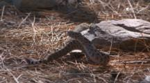 Roadrunner And Rattlesnake